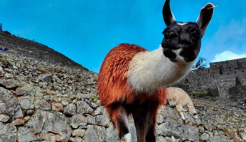 Machu Picchu tours in Cusco region