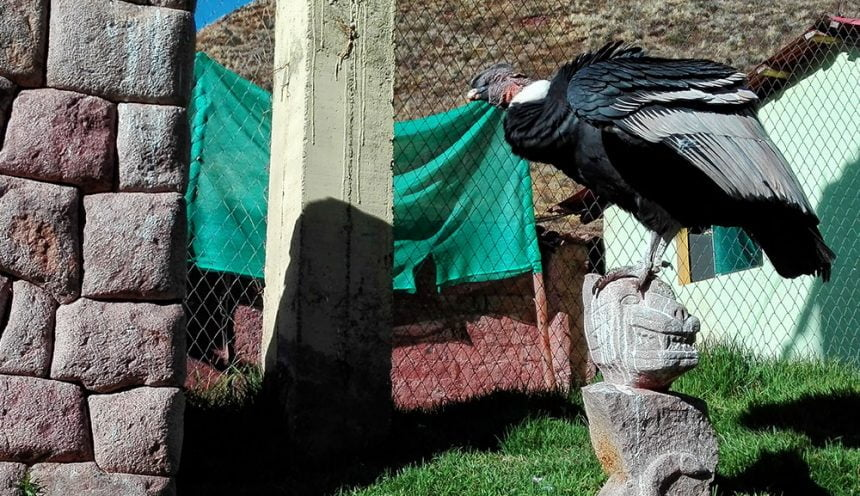 Pisac tours in Peru