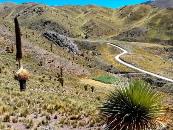 Puyas Raimondi & Queswachaka Bridge