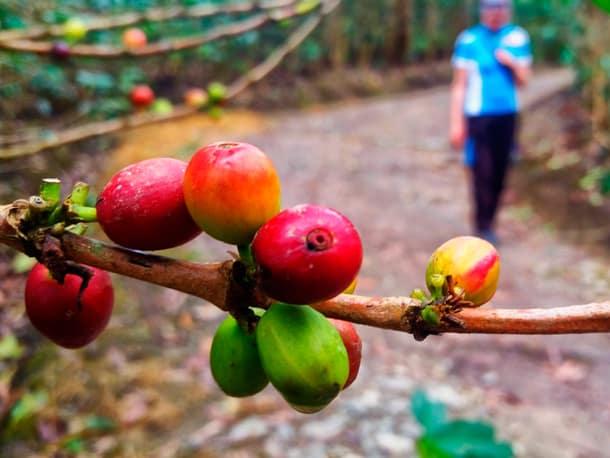 Kaffee Dschungel Tour nach Machu Picchu