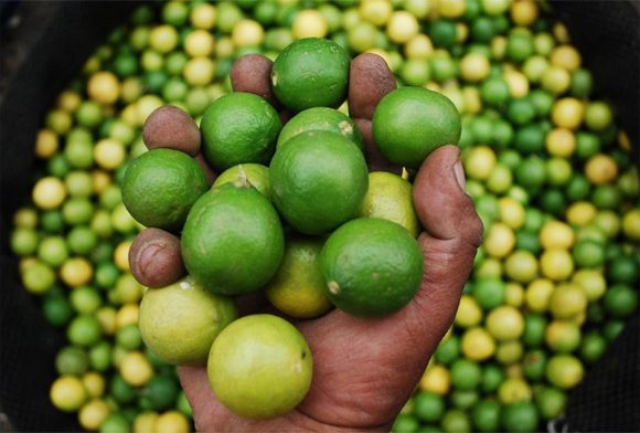 Lemons - the fruit of Peru