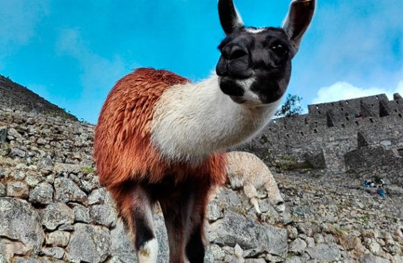 Huchuy Qosqo, Lares and Machu Picchu Tour