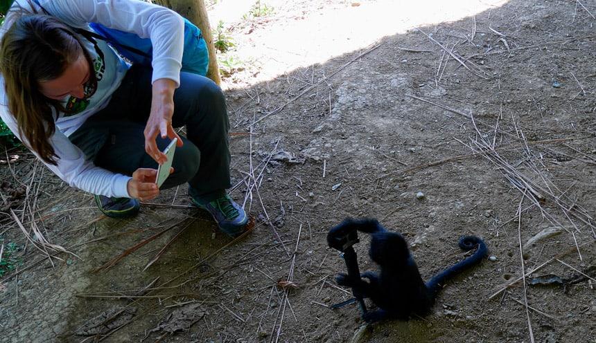 Manu Jungle Tour Peru monkey
