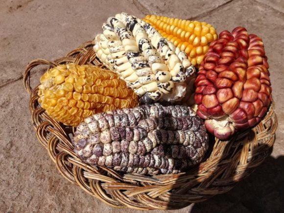 Corn Variations Peru